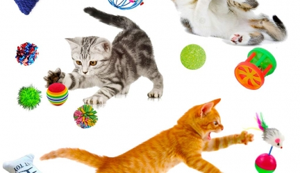 SunGrow 6 Pack Cat Toys – Increases Stimulation – Keeps pet Mentally & Physically Fit – Relieves Boredom & Stress – Prevents unwanted Behavior – Gives Hours of Fun
